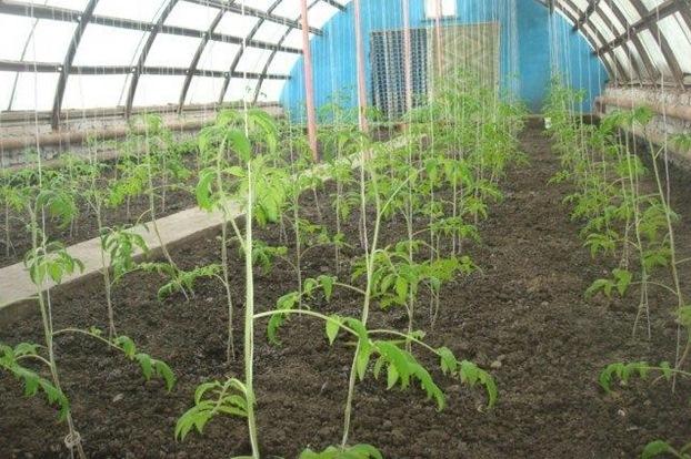 В теплицы ИК-2 УФСИН России по Ульяновской области высадили овощные культуры